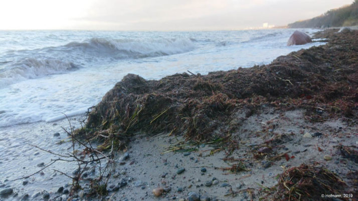 Kick-off for new project on beach wrack